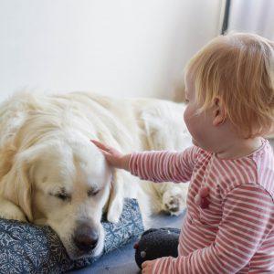 Vrienden voor het leven: 5 tips voor de perfecte omgang tussen je baby en hond