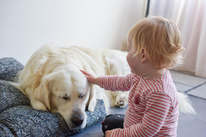 omgang hond en baby